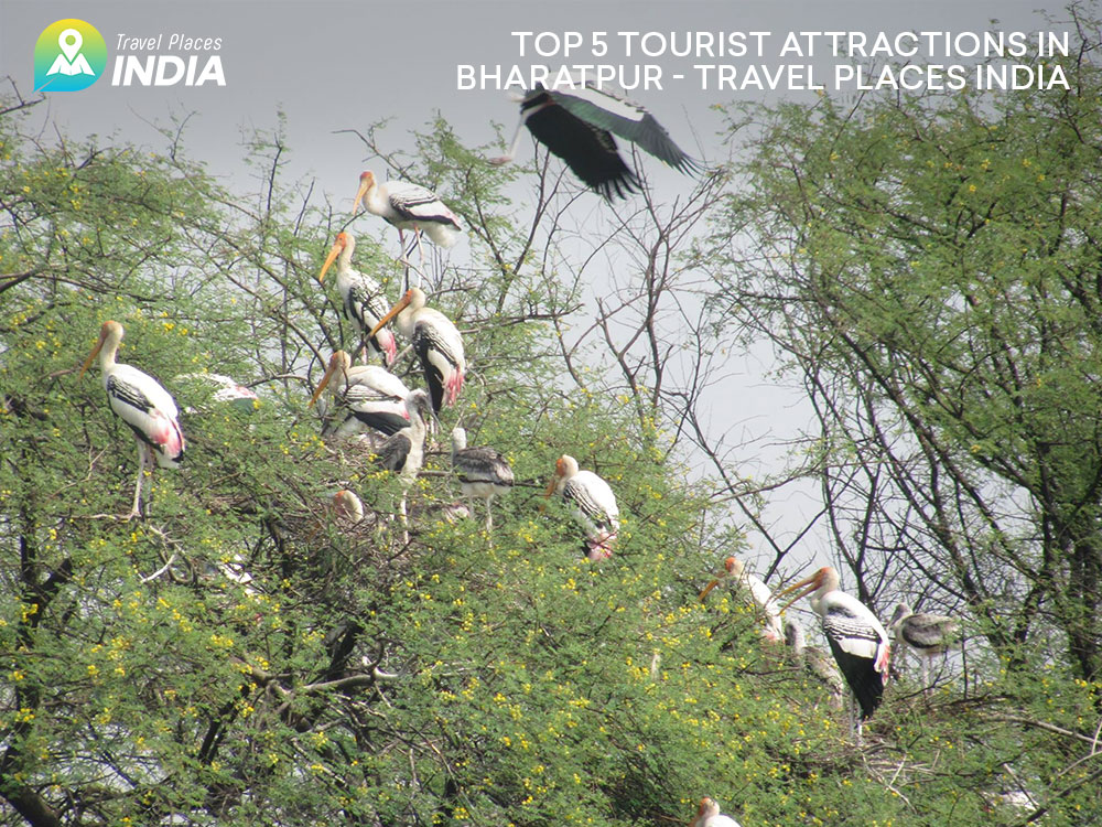 Top 5 Tourist Attractions in Bharatpur